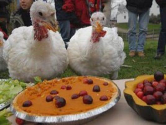 turkeys-feasting