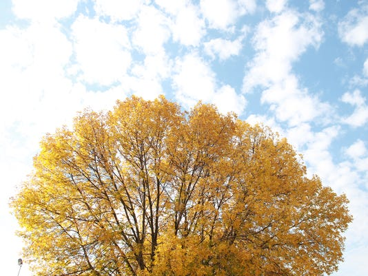 IOW_0927_fall_leaves_06