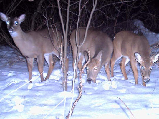 Bill Frey of York captured this group of whitetails