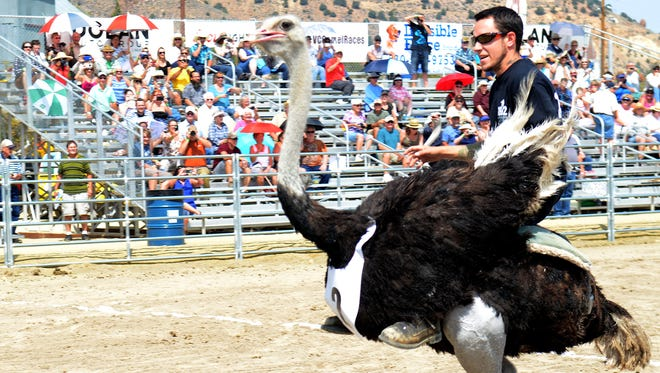 Brade Emmans, 29, of Carson City races an ostrich on Friday at the 56th annual International Camel & Ostrich Race in Virginia City.
