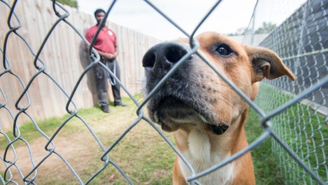Duke, a German shepherd mix, takes a short break on Nov. 22 during playtime at the Escambia County Animal Shelter in Pensacola.