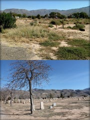 This collage shows the state of the family care portion of Monte Vista Cemetery before and after Project Honored Past.