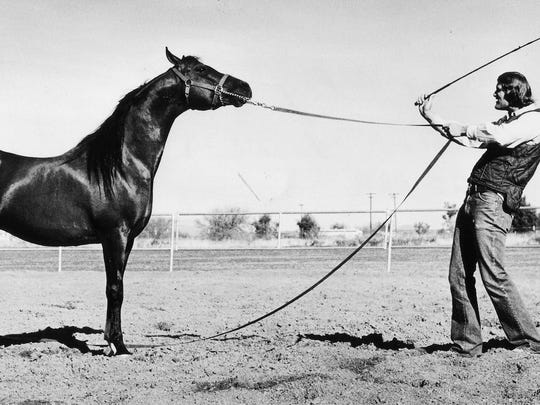 The classic neck, head and lines of the Arabian horse have stood stayed constant over the year as seen in this photo from 1980. Gary Clay of Del Camino Ranch schools a horse at Paradise Park.