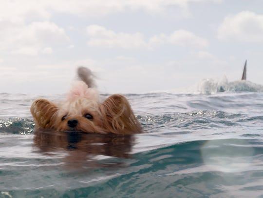 """Whatever the shark does in """"The Meg,"""" he better not"""