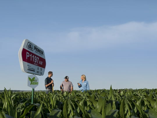 Farmers stand in a corn field produced with the P1197