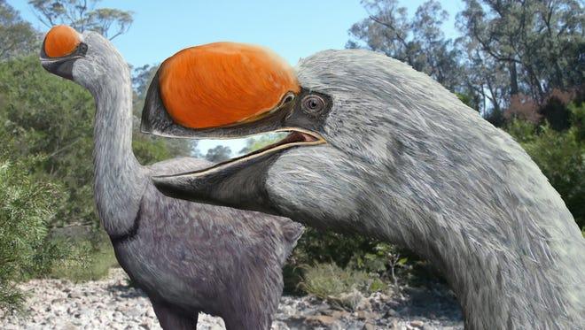 A rendering of the Australian Big Bird, properly termed Dromornis stirtoni.