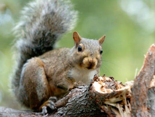 635538096915810263-squirrel