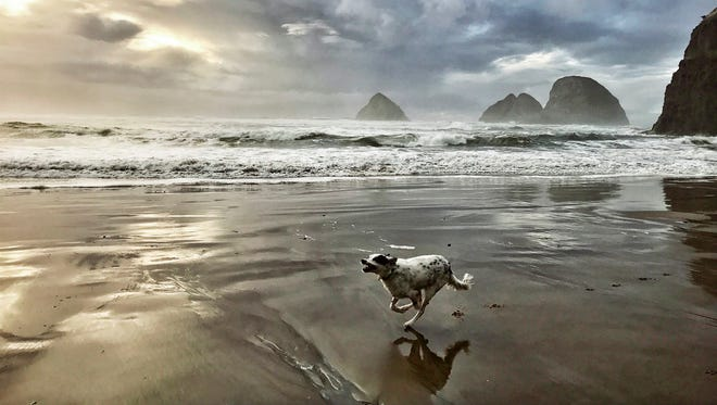 "Melissa Farlow captured a dog racing across the sands of Cape Lookout, Oregona and is part of ""National Geographic's Earth Day flash print sale"" featuring signed prints from 22 of National Geographic's top photographers in honor of Earth Day."