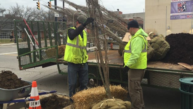 Richland Community Development's Beautification Sector is responsible for six new hackberry trees being plant on Fourth Street between Mulberry and Walnut streets Tuesday. Rex Landscaping planted the trees.