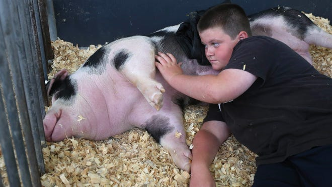 Noah Heins, 11, a 4-H member rom Center Point, pets Baby Spot, his 5-month-old pig, at the Swine Barn on Wednesday, Aug. 20, 2015, at the Iowa State Fair in Des Moines, Iowa.