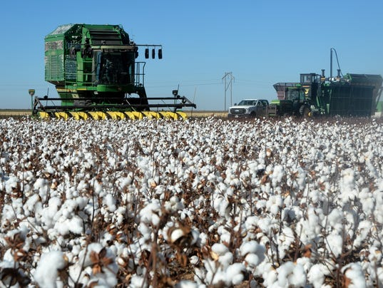 cotton-harvest.jpg