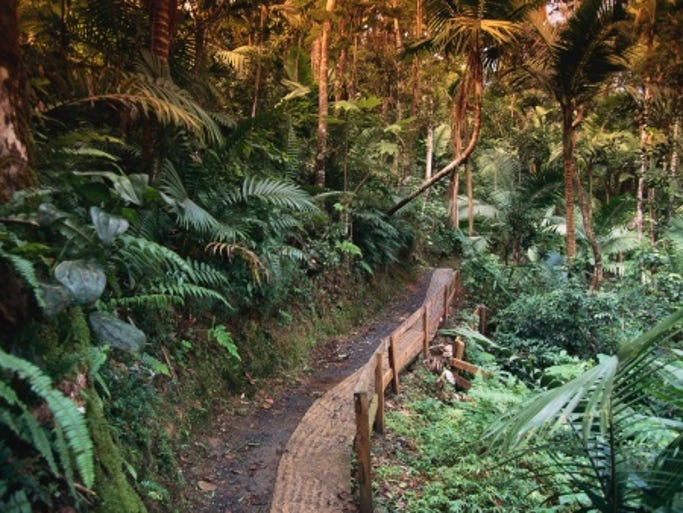 The 28,000-acre El Yunque National Forest, the only rainforest in the U.S. Forest Service system, has numerous trails winding through its tropical setting.