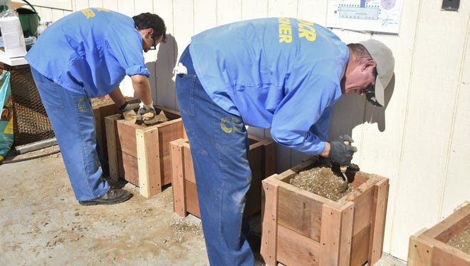 On Saturday, roughly 20 Avenal State Prison inmates installed a garden into one of the six yards on the facility.