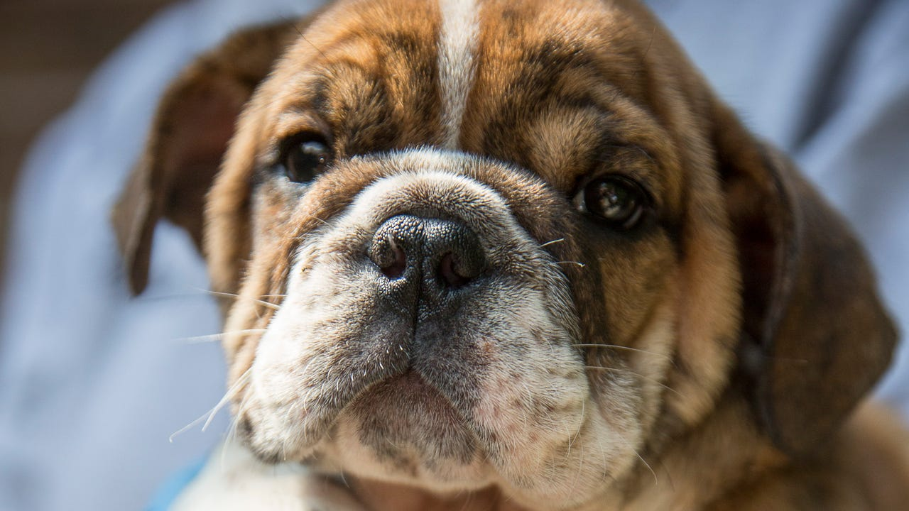 The puppies rescued in Garfield will be quarantined as their health is checked.