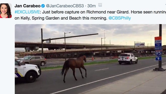 This tweet from CBS Philly reporter Jan Carabeo shows a horse running in a Philadelphia street.