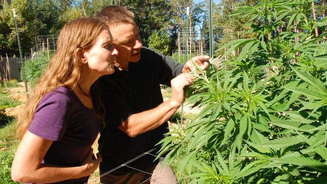 FILE - In this June 25, 2015 file photo, Oregon SunGrown Growers' Guild President Cedar Grey and his wife, Madrone, examine one of their medical marijuana plants at their garden in Williams, Ore.  With Southern Oregon in a drought, many rural residents don't believe wells on rural residential and woodland resource lands should be tapped for high-intensity marijuana grows. They think marijuana growers should instead obtain legal water rights and use water from irrigation districts. (AP Photo/Jeff Barnard, File)