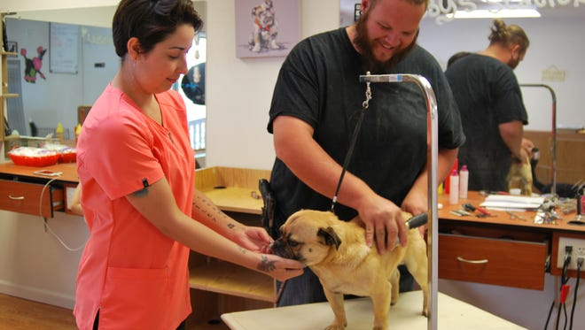 Jesse Christman, owner of Pawsitively Sweet Pet Bakery and Grooming, pets Gabba as Thorin Pennington grooms the pug mix.