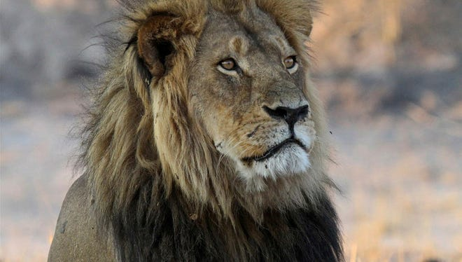 Cecil the Lion in Oct. 27, 2013.