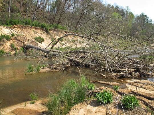 As Pickens County leaders worry that a new plan is inadequate for testing and evaluating the risk of exposure to PCBs where two dams were removed from the Twelve Mile River, Judge Anderson is planning a late April hearing to give everyone a chance to voice concerns. An area upstream from the former Woodside I dam has several trees that have fallen over the river from the eroded shoreline.