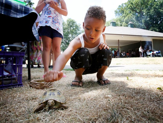 Ivan the turtle captures 6-year-old Jermaine Masker's