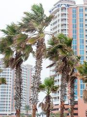 Palm trees along Via De Luna Drive near the Portofino