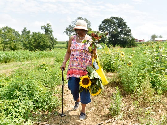 Michelle Garnett of Wilmington, Del., carries her cut sunflower blooms at Maple Lawn Farms' first Sunflower Festival Saturday, Aug. 12, 2017, in Fawn Township. The farm, which also runs the agrarian-themed amusement park Maize Quest Fun Park, added a five-acre field of sunflowers that visitors could pick during a sold-out weekend event.