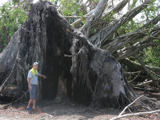 Eagle Creek Golf & Country Club superintendent Jimmy Alston stands next to a banyan tree damaged by Hurricane Irma, which came through Naples on Sept. 10, 2017. The golf course, which was undergoing a renovation in the summer, had its reopening delayed due to Irma, and reopened Nov. 15, 2017.