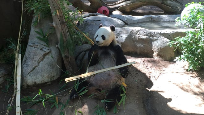 Get close to the Giant Pandas in Panda Canyon at the San Diego Zoo.