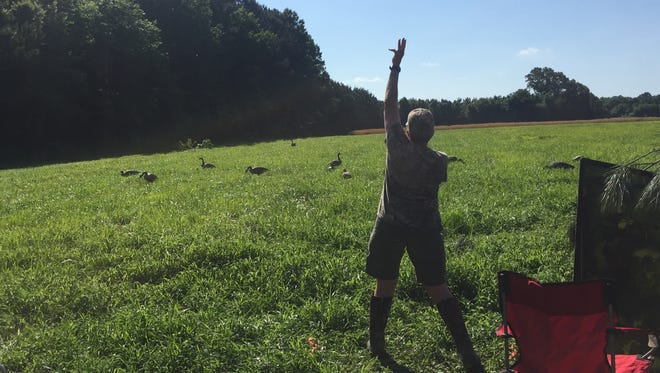 Handler Sue Snow of Ontario, Canada signals to her dog, Havoc, during a test run of a hunting test course near Cashville, Virginia at the North American Hunting Retriever Association Invitational on Thursday, June 7, 2018.