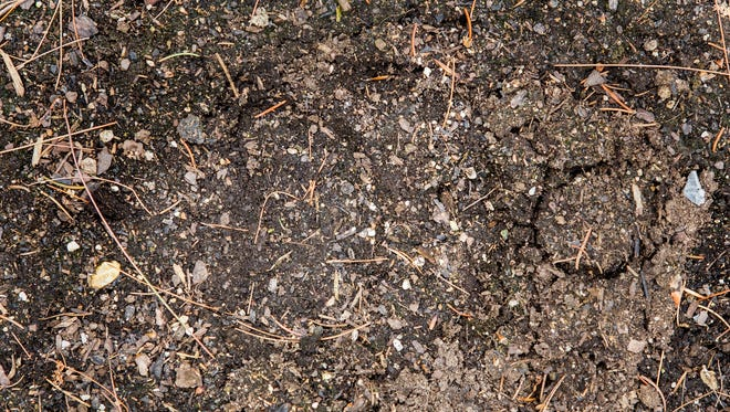 A black bear's paw print rests in the garden of Sean Coughlan's back yard in Hockessin on Wednesday afternoon. A black bear making its way from Pennsylvania to Maryland tracked through a number of yards in New Castle County from Tuesday night into Wednesday.