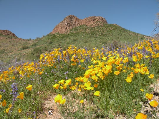 Expect lots of flowers and scenery when driving U.S.