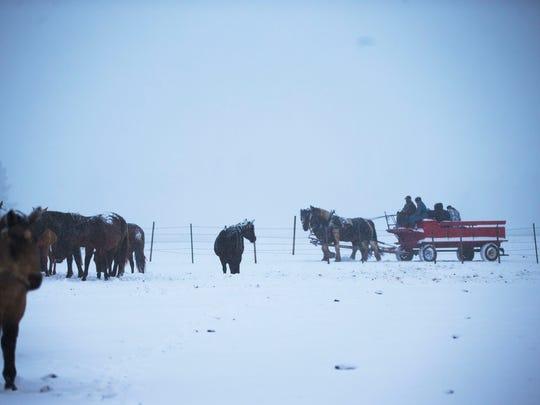 Wayne Shirey leads horses on a wagon ride at Windmill