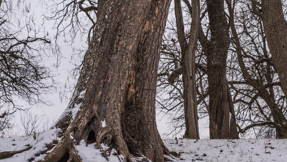 Snow covered trees are seen at Glen Miller Park in