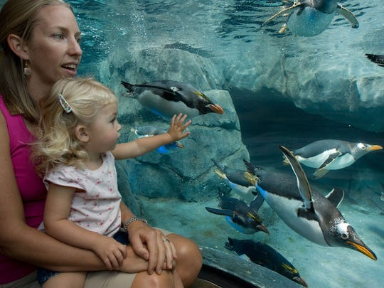 The Tennessee Aquarium is a favorite of visitors and