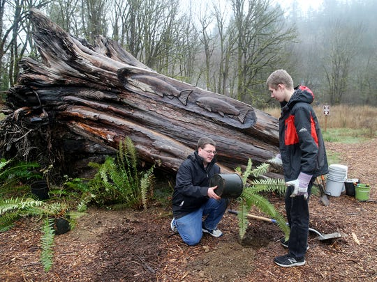 Jeff Brimhall, of Port Orchard, and his son Nick, 14, plant ferns at the Chico Salmon Park in Bremerton.