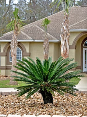 Small rocks may be used to surround various trees and create focal points in the yard.