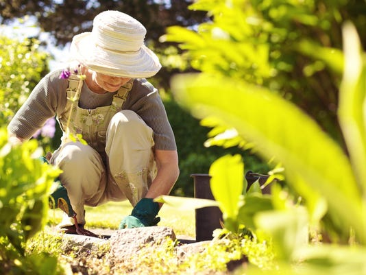 Senior female gardener working in her garden