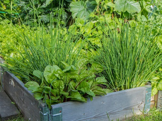 Lettuce, chives and other herbs and plants in a crate