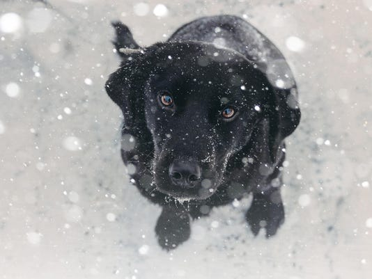 Playing with the snow