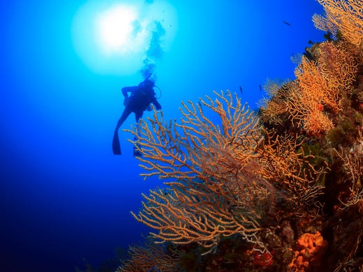 <strong>No. 6: The Andros Wall -&nbsp;Bahamas. </strong>Considered the best wall dive in the Bahamas, the Andros Wall comprises a series of sites where divers can explore underwater mountains and canyons in a wide range of sizes and shapes.