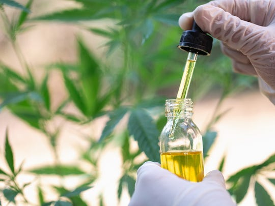 A vial and dropper of cannabidiol oil in front of a hemp plant.