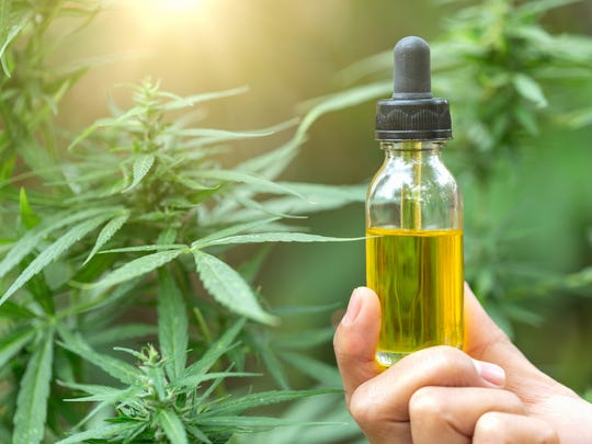 A person holding up a vial of cannabidiol-rich liquid in front of a flowering cannabis plant.