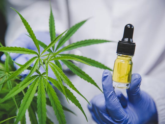 Scientist holding a CBD bottle next to a cannabis plant