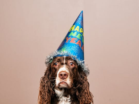 A dog with a mournful expression wearing a Happy New Year hat.