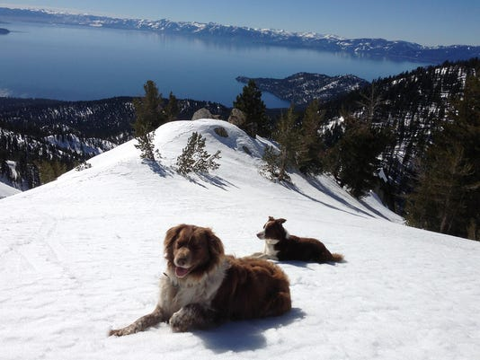 REN_BACKCOUNTRY_DOG04.jpg