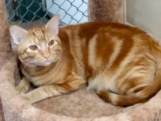 Seabert is available for adoption with Sun Cities 4