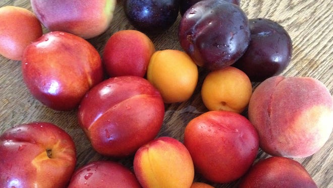 Peaches and plums ready for a summer dessert made with biscuit dough.