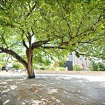 10Best: Trees that witnessed American history