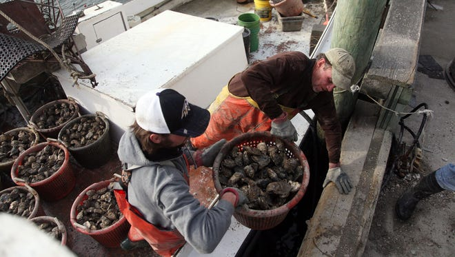 Capt. Jack Swift, right, and first mate Danny Diggs lift bushels of oysters onto the dock at MeTompkin Bay in Crisfield. The Maryland Department of the Environment recently reclassified for shellfish harvesting areas of the Wicomico River in Somerset and Wicomico counties and Hall Creek and the Big Annemessex River in Somerset.
