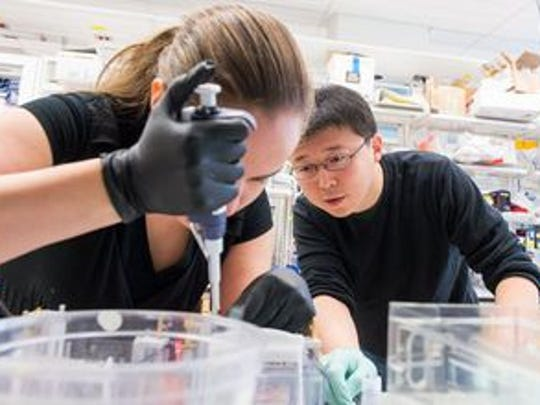 Feng Zhang, a CRISPR researcher with the Broad Institute, is pictured in a lab.